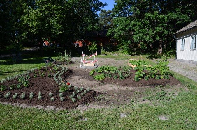 5-annu-ett-land-ar-pa-vag-att-planteras-29-juni-dsc_8812