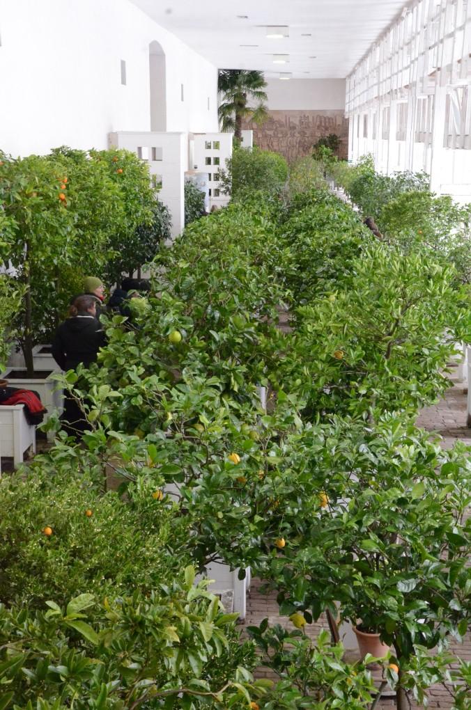 oranienbaum-dsc_0766